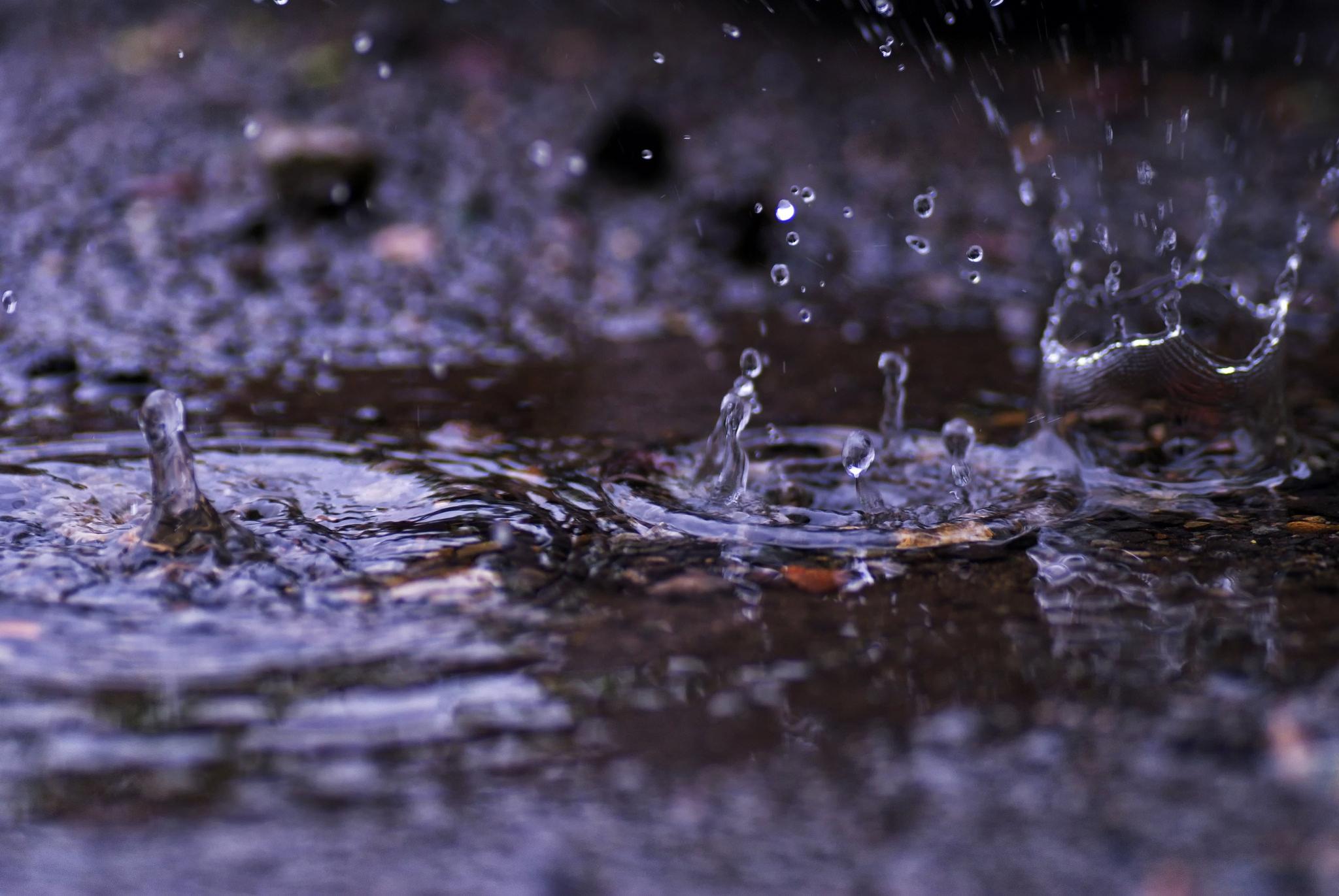 parīt līs lietus jeb ..  sargājot valodas tautastērpu