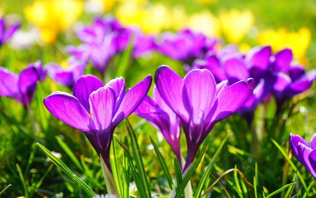 Pārmaiņu vējos. Pavisam jauns pavasaris!